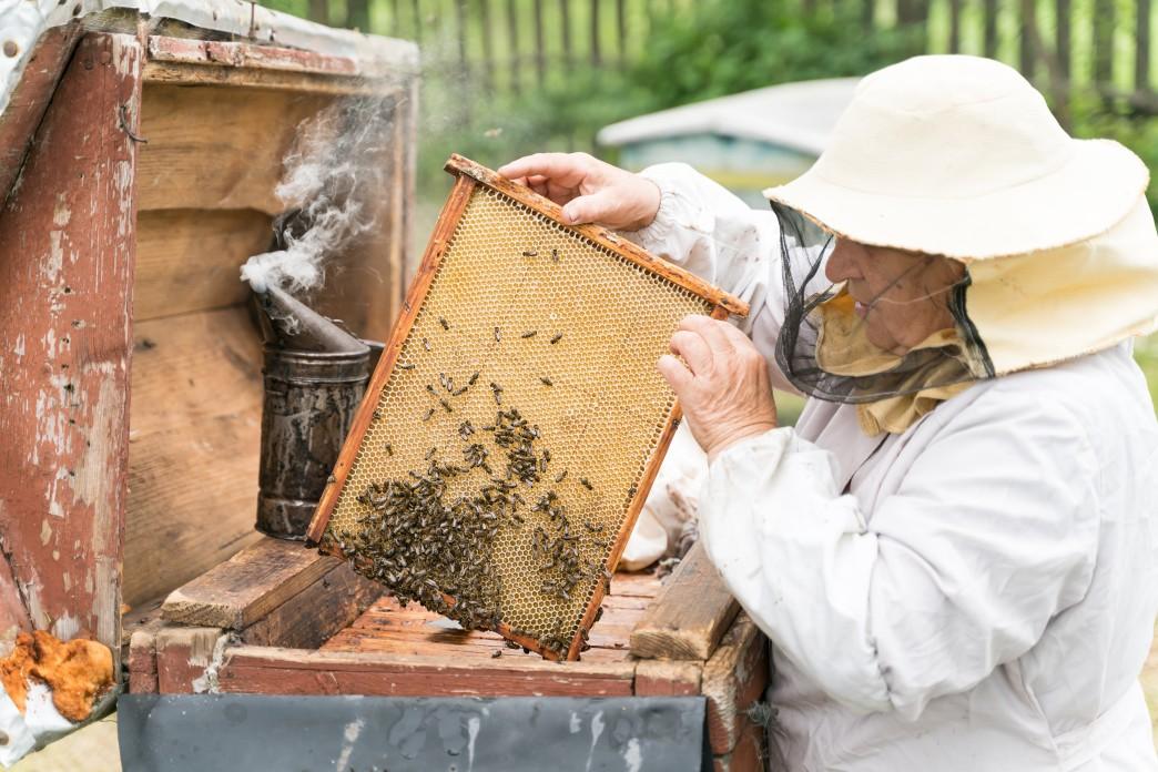 Turkey Establishes Honey Research Lab in Pakistan